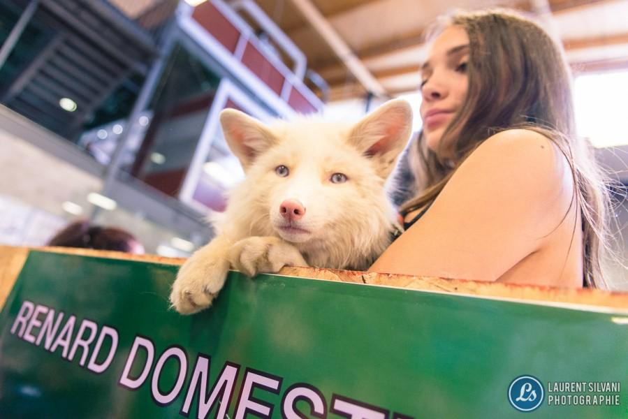 Salon des animaux exotiques de Saguenay