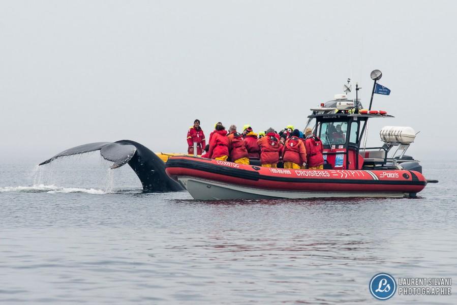 Croisière aux baleines à la Côte-Nord