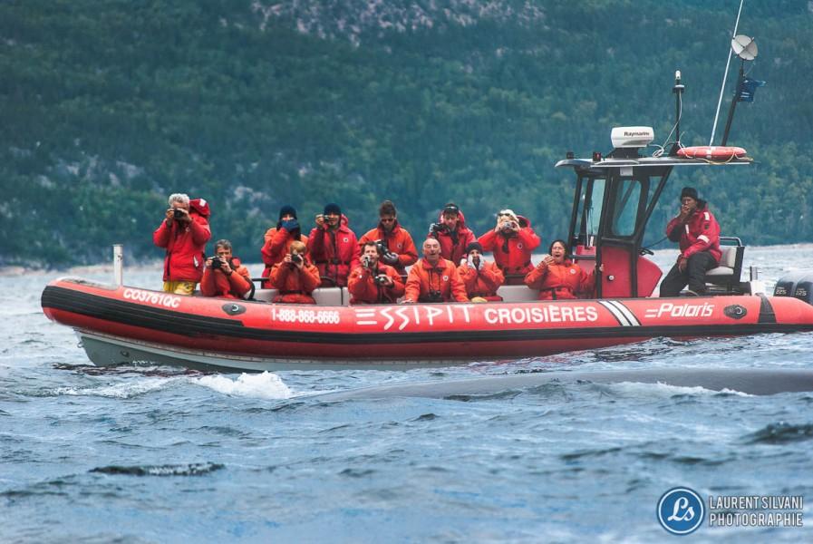 Croisière aux baleine sur le fleuve St-Laurent
