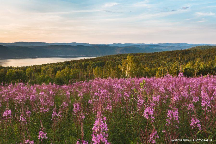 Le fjord en direction de St-Félix d'Otis